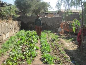 Beautiful Garden in Dhera Ethiopia
