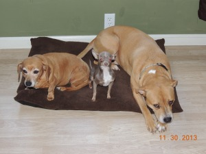 Sade, Lola, and Francis